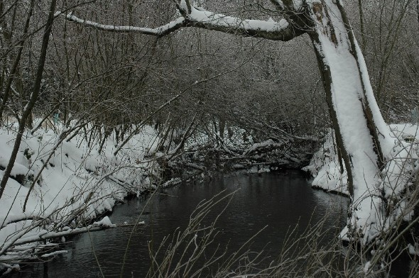 3-Creeks in the Winter